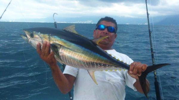 Puerto vallarta fishing report inshore report august 2011 for Nuevo vallarta fishing