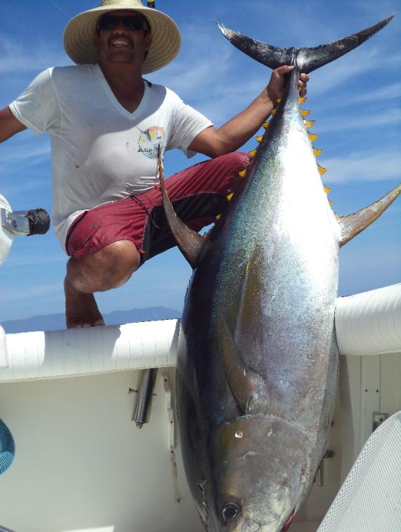 Puerto vallarta fishing report april 2014 2 5 day tuna charter for Fishing in puerto vallarta